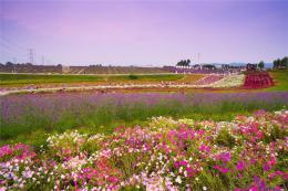 批发销售野花组合种子  野花组合种子出芽率