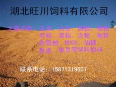 誠信求購高粱棉粕玉米蕎麥