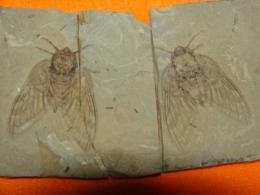 古化石一般能卖多少钱