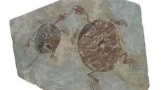 古生物化石通过快速成交价格高吗