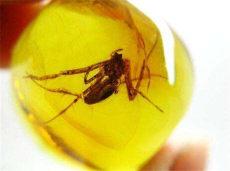 昆虫琥珀在国内成交价格