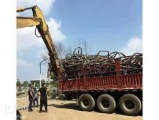 景县成盘400铝线电缆回收 实时报价