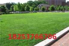 適合東北地區種植的綠化草坪種子有哪些