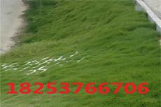 暖季型绿化草籽怎么卖  多少钱一斤