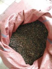 白刺果种子批发价格 白刺果种子销售公司