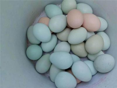 绿壳鸡蛋的好处 价格多少 哪里有卖