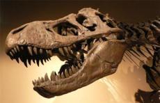 鉴定恐龙牙化石哪里比较可靠
