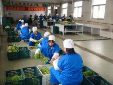 東城蔬菜配送公司提供食堂配送蔬菜上門服務