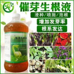 益富源催芽生根液促进花生根系发达预防根腐