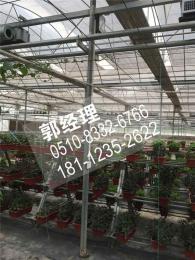 福州蔬菜大棚报价/图片本地推荐