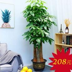 广州越秀区盆栽植物有卖 东山口办公室绿植