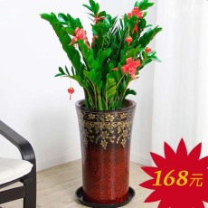 广州天河北哪里有花卖 购买办公室绿植盆栽