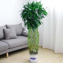 广州增城开发区永和新塘绿植盆栽植物购买