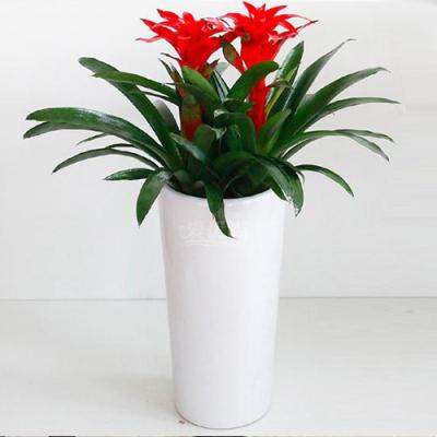 广州黄埔区哪里卖盆栽 办公室绿植花卉购买