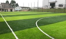 运动场草坪体育场草坪