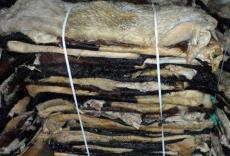 印度蓝湿牛皮进口清关青岛代理公司