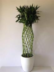 常州花卉租擺 綠植租售 室內外苗木養護