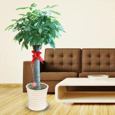 常州室內植物綠化-常州綠植盆栽租賃養護