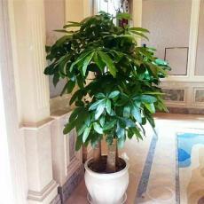 花卉租摆  满足客户各种绿植租赁的不同需求