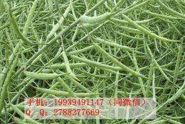 油菜怎么施肥 帕尔奇叶面肥膨籽増油