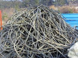 中山旧电缆回收多少钱一吨