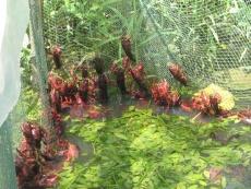 農豐蝦王沼蝦養殖使你順利走上致富道路