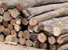 青岛港木材进口报关关税/木材进口清关代理
