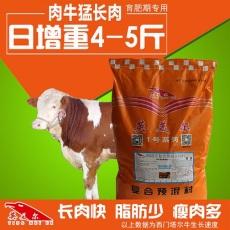 肉牛快速催肥需注意什么肉牛吃什么長得快