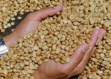 进口咖啡报关时效 咖啡进口报关速度快