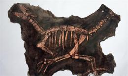 恐龍化石現今市場行情怎么樣