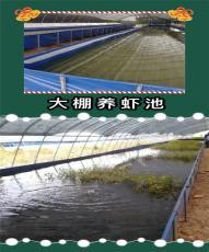 無毒養殖小龍蝦魚池 環保防漏水水池