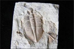 化石鉴定现金收购哪里正规