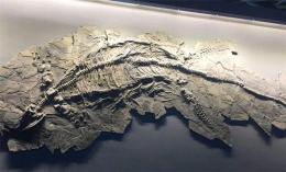 鱼龙化石交易价格及鉴定方法