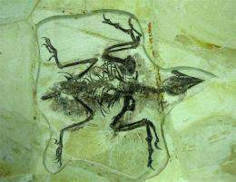 怎样交易昆虫化石是安全的