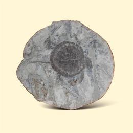 乌龟化石鉴定收购去哪里正规