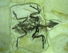 华豫之门拍卖地点一般在哪里 昆虫化石