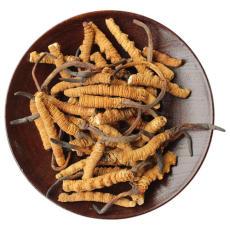 惠州回收冬虫夏草价格表