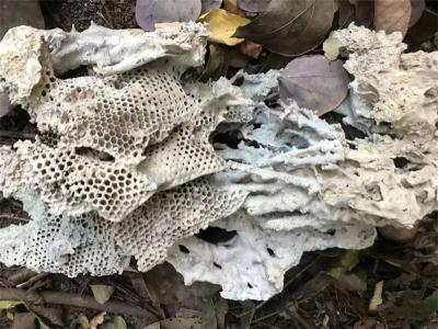 蜂巢奇石快速交易到哪里