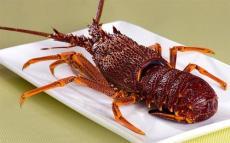 马达加斯加龙虾进口费用是多少