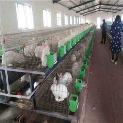 哪里有正规种兔养殖场肉兔种兔最新市场价