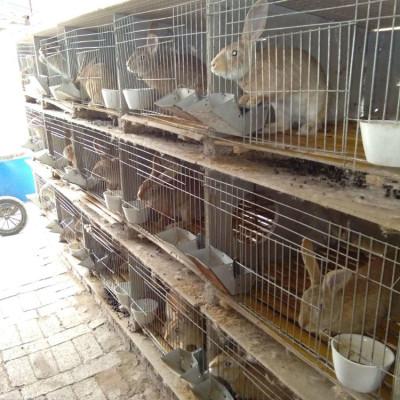 养殖100只杂交野兔种兔一年有多少利润