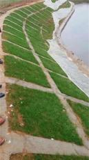 池塘边坡绿化用什么草种