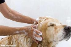 北京宠物尿垫进口清关报关价格
