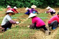 貴州椪柑苗價格多少錢
