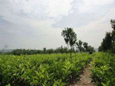 貴州哪個基地有柑桔種苗