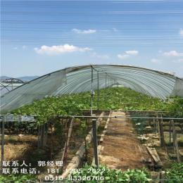 山东青岛玻璃温室大棚温室连体棚免费送货