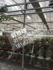 云南玻璃温室大棚蔬菜大棚全国发货