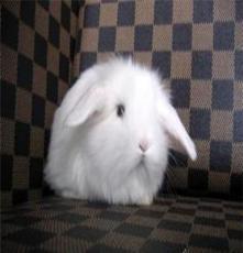 南寧市玉兔苑寵物兔專賣店