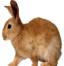 野兔山東鑫億牧業野兔價格