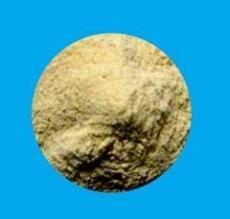 食品加工用膨化薏米粉,薏米粉,薏米膨化粉